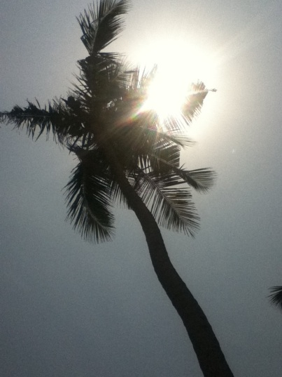 Palm trees swaying in the sun Goa