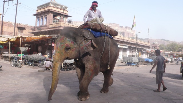 Elephant In Jodhpur
