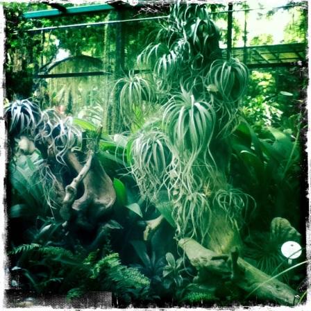 Weird plants at Singapore Botanic Gardens