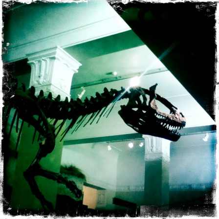 T Rex skeleton Auckland Museum Hipstamatic