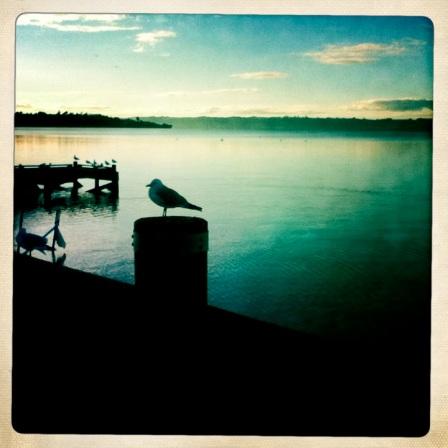 seagull water hipstamatic serene